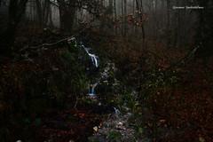 秋の雨、森の流水  -  ruscello nel bosco d'autunno