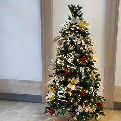 #Buongiorno Sapienza con una foto dell'albero di Natale dell'Edificio di Ingegneria informatica di @remiromi1 ・・・ #Repost: «Ultimo natale in università. Il settimo. Wow.» ・・・ #repostSapienza #ImmaginiDallaSapienza di #studentiSapienza #NataleAllaSapienza