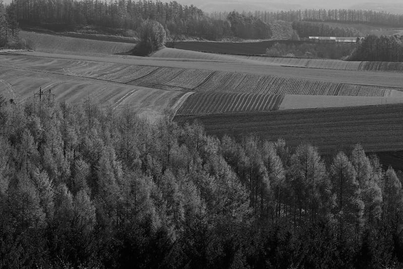 モノクロで撮影した美瑛の畑