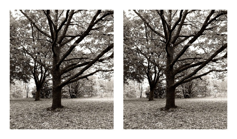 PicMonkey Collage Trees
