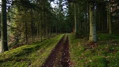 Lille skovvej