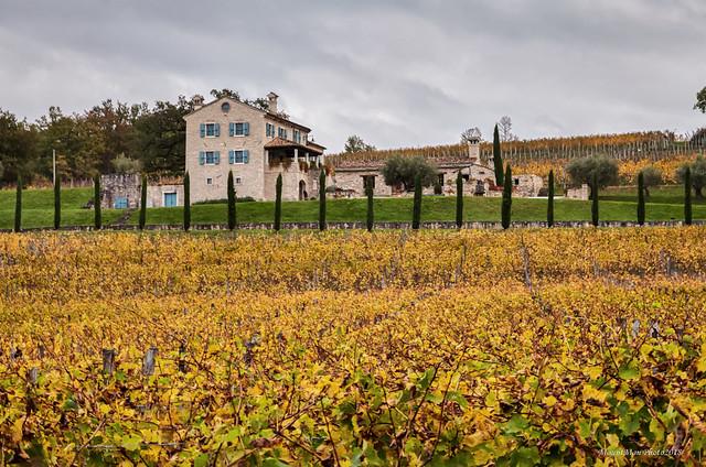 Vinogradarsko-vinarsko imanje Kabola nedaleko, Canon EOS 5D MARK II, Canon EF 24-105mm f/4L IS USM