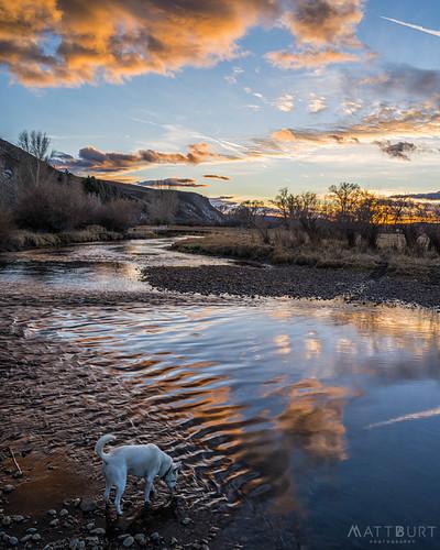 dog clouds drink luna reflection sunset tomichicreek water