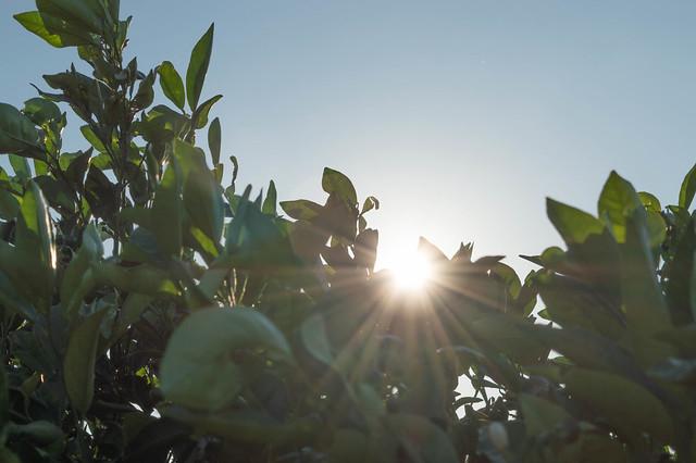 Ακόμα ένα φθινόπωρο με «άρωμα» άνοιξης