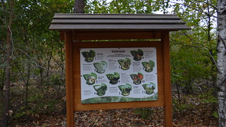 In Beilrode vor Jahr und Stunden im Wald die Vögel girrten 00692