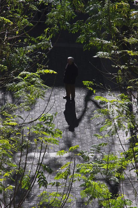 Vista cenital de una persona en una ciudad, rodeada de ramas de árboles