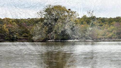 L'arbre aux cormorans