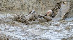 Man in Mud