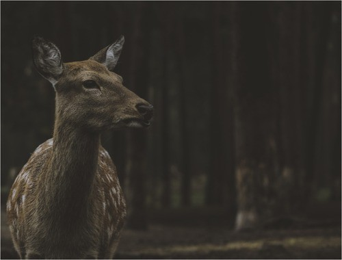 traumwald-weltenklang:forest creatures - october 2014 learn...