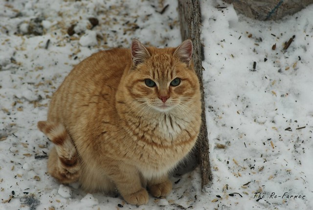2019-01.outside.cats.big.jim.1