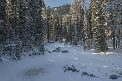 A Winter's stream muffled under snow 2019