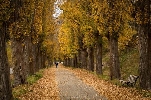 Un paseo de otoño