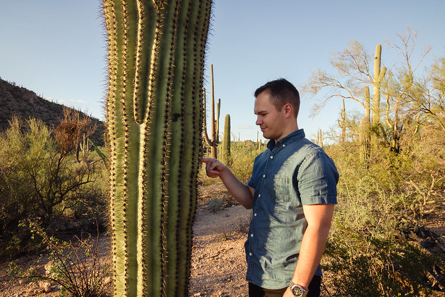 A Cacti Goodbye to Arizona // Saguaro National Park