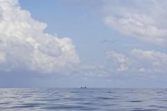 Pescadores en altamar
