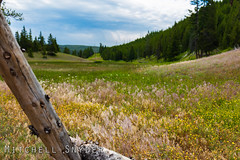 Yellowstone National Park - Favorites - 7