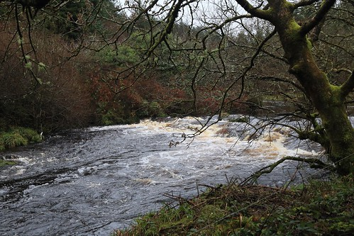 IMG_4535   Smearlagh River 23rd December 2018.