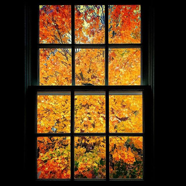 Peeking out peaking out. 🍂 🍁 Not many more days left of these awesome fall colors. This year's colors seem especially intense. #Autumn #Colors #Window #newengland #shotoniphone #igersboston #igersnewengland #peaking #peeking