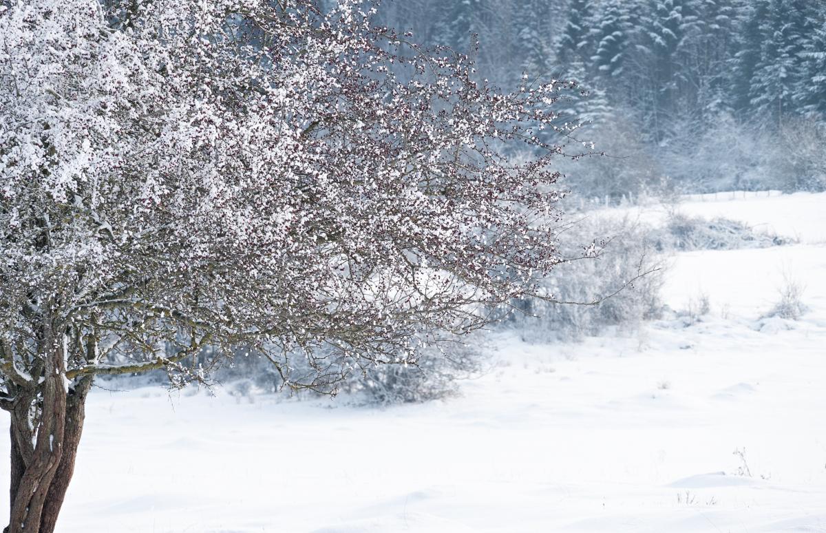 Un peu de neige 45938345005_c1d2e39f00_o