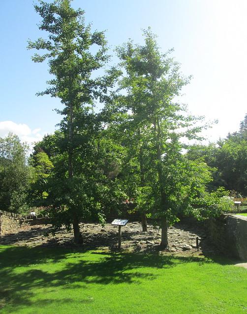 genetics garden , Dundee