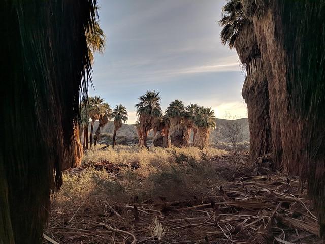 Among palms.