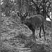 <p><a href=&quot;http://www.flickr.com/people/dark-dave/&quot;>dark-dave</a> posted a photo:</p>&#xA;&#xA;<p><a href=&quot;http://www.flickr.com/photos/dark-dave/46959700651/&quot; title=&quot;Roe Deer, here's looking at you 02010029&quot;><img src=&quot;http://farm5.staticflickr.com/4826/46959700651_cc056fc6b4_m.jpg&quot; width=&quot;186&quot; height=&quot;240&quot; alt=&quot;Roe Deer, here's looking at you 02010029&quot; /></a></p>&#xA;&#xA;<p>M2E59L174-174R399B388</p>