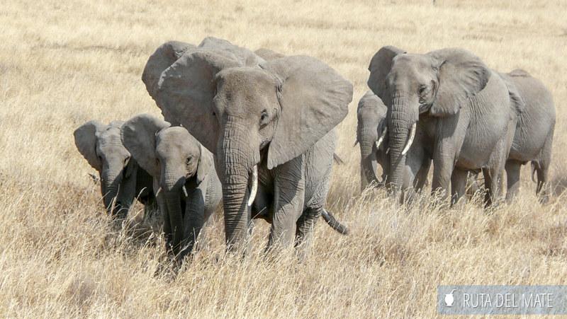 Guia para viajar a Kenia y Tanzania P1140902