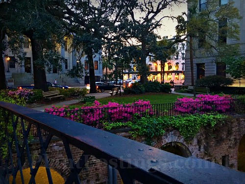 savannah evening