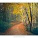 Lanthwaite Wood by Amar Sood