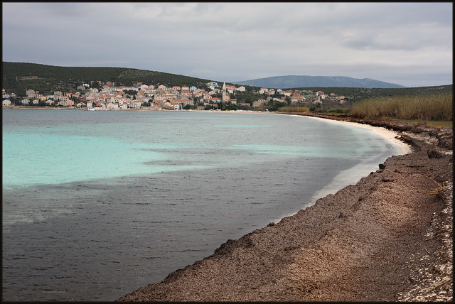 Island Unije - Posidonia oceanica, Neptune grass, Mediterranean tapeweed, Posidonija, Oceanski porost, Morska trava, Voga, 6877 Bot, 2018 S 2762 Unije_020,