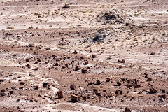 View of the vast arid dry desert of Petrified Forest National Park and the Painted Desert of Arizona in Four Corners area. Logs everywhere