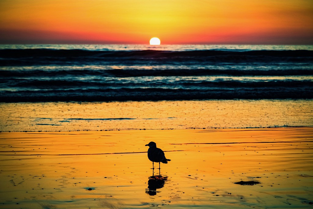 A Seagull Watches The Setting Sun On Venice Beach