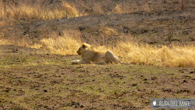Animales hacer un safari P1110494