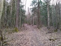 Hovskogen: flow to climb , Askim, Østfold, Norway