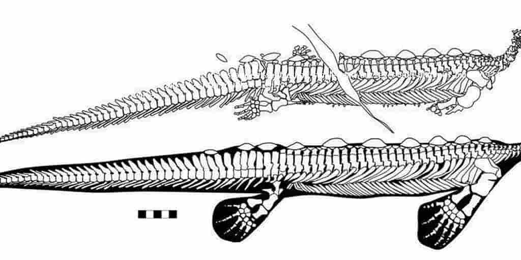 un-fossile-étrange-découverte