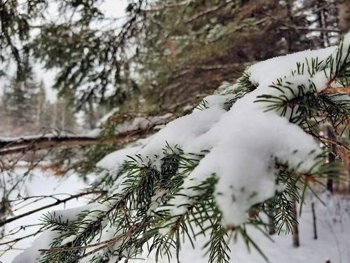 20181129.spruce.snow