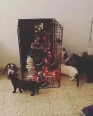 The only way to keep a christmas tree when you have cats