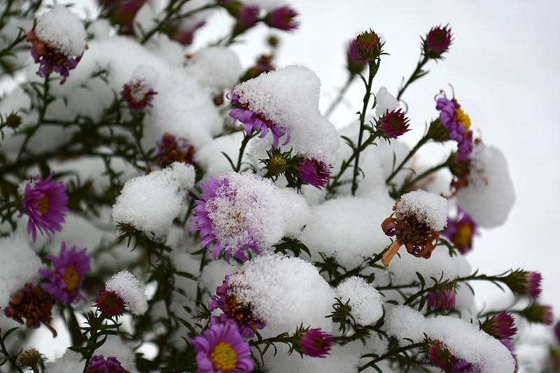 цветы в снегу 9