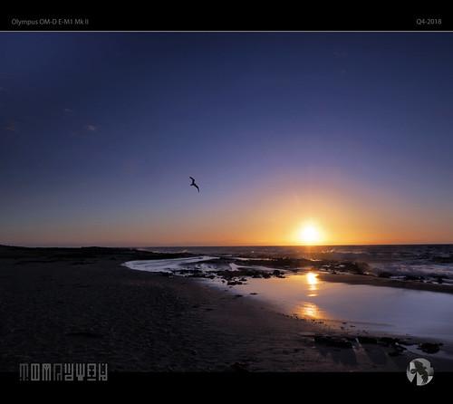 soar sky sun sunset bird seagull gull degull tomraven aravenimage beach rocks spray reflections q42018 olympus em1mk2