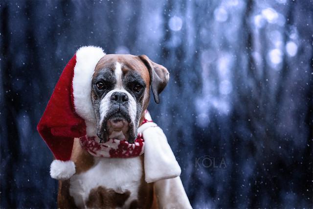 51/52 Happy Holidays, Canon EOS 5D MARK III, Canon EF 135mm f/2L