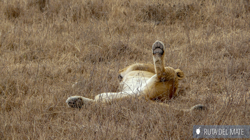 Animales hacer un safari P1150064