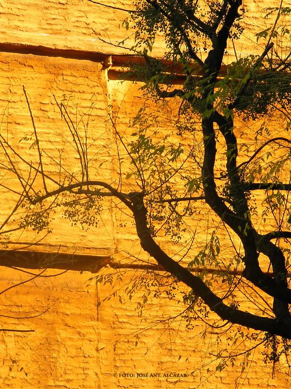 Silueta de árbol sobre fondo de fachada naranja