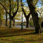 Autumn shadows at Avenham Park, Preston