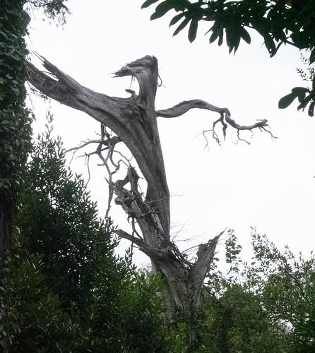 Is it a man? Is it a tree? Is it?