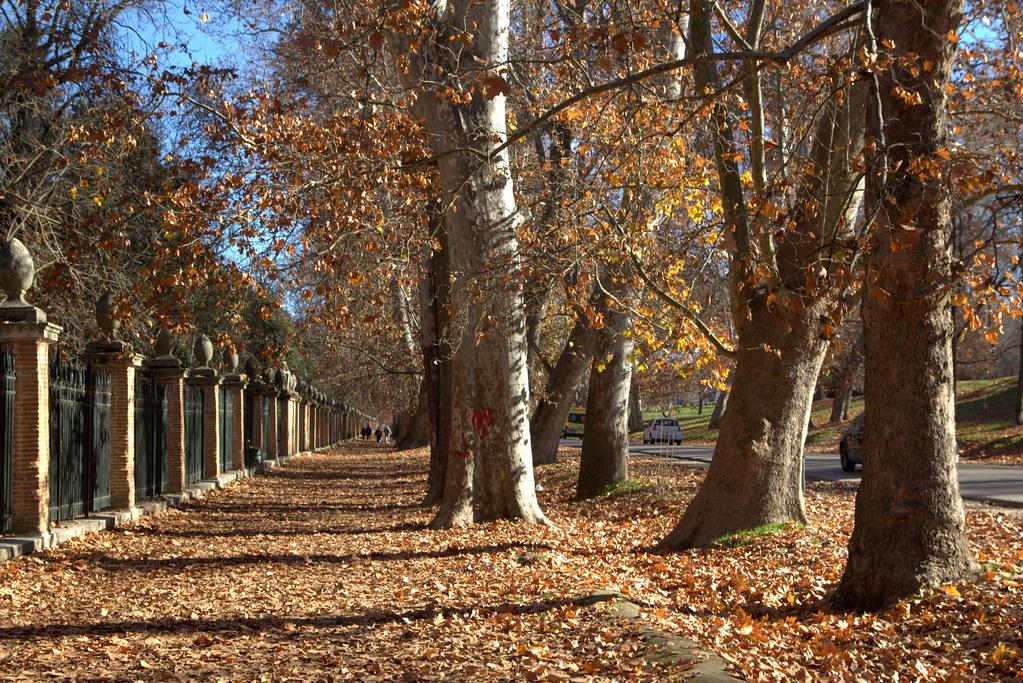 Invierno en los jardines de Aranjuez