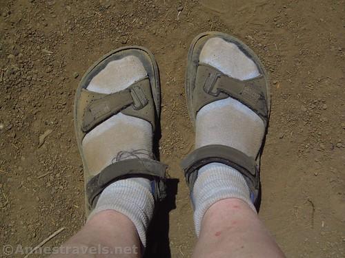 Dusty socks at Nampaweap in Grand Canyon-Parashant National Monument, Arizona