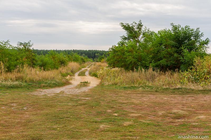 Полевая дорога, Воронежская область