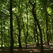 Notton Wood Nature Reserve (48)