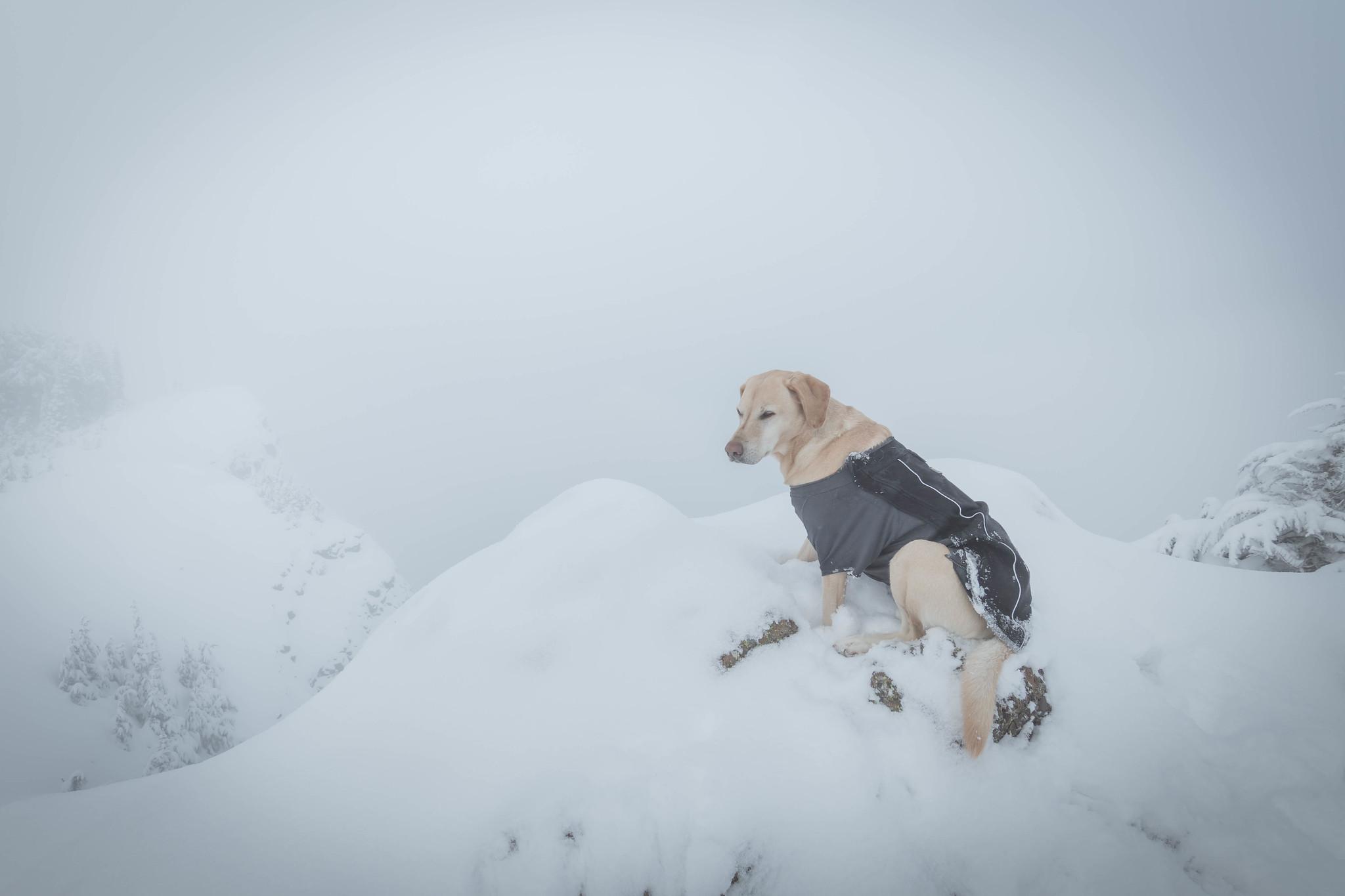 Summit dogs on Dickerman Mountain