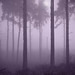 Amethyst fog