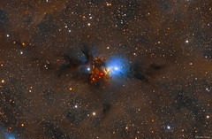 Stardust of the Perseus Molecular Cloud